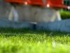 Guangzhou grass